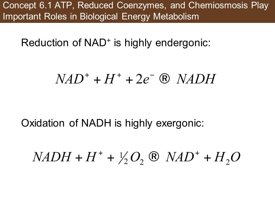 Concept 6.1 ATP, Reduced Coenzymes, and Chemiosmosis Play Important Roles in Biological Energy Metabolism Reduction of NAD + is highly endergonic: Oxi