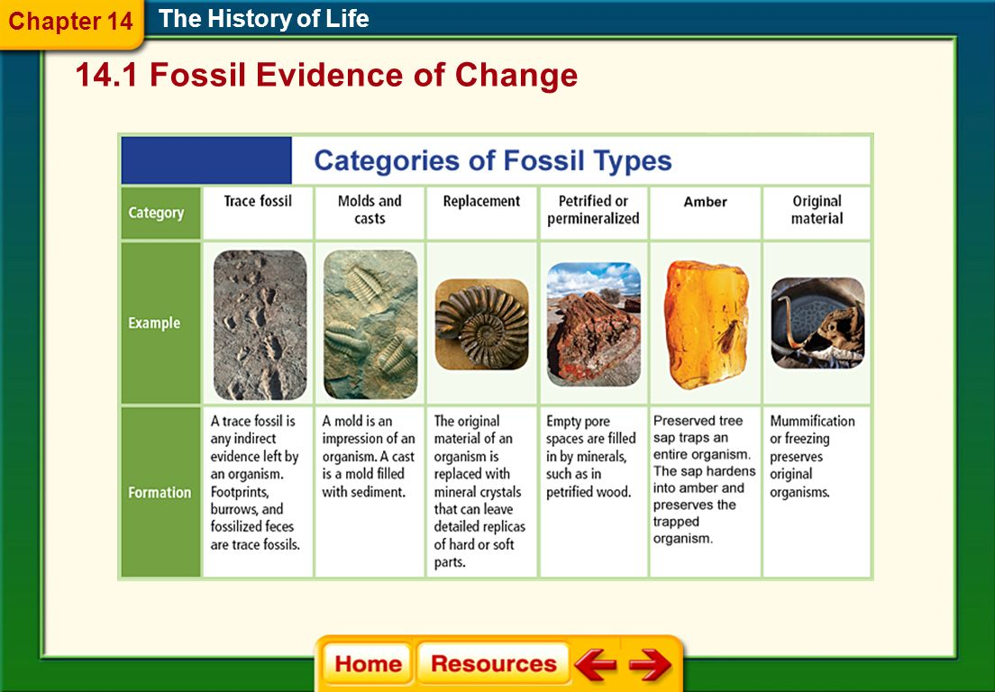 The Mesozoic Era The History of Life Mammals and dinosaurs first appeared late in the Triassic period, and flowering plants evolved from nonflowering plants.