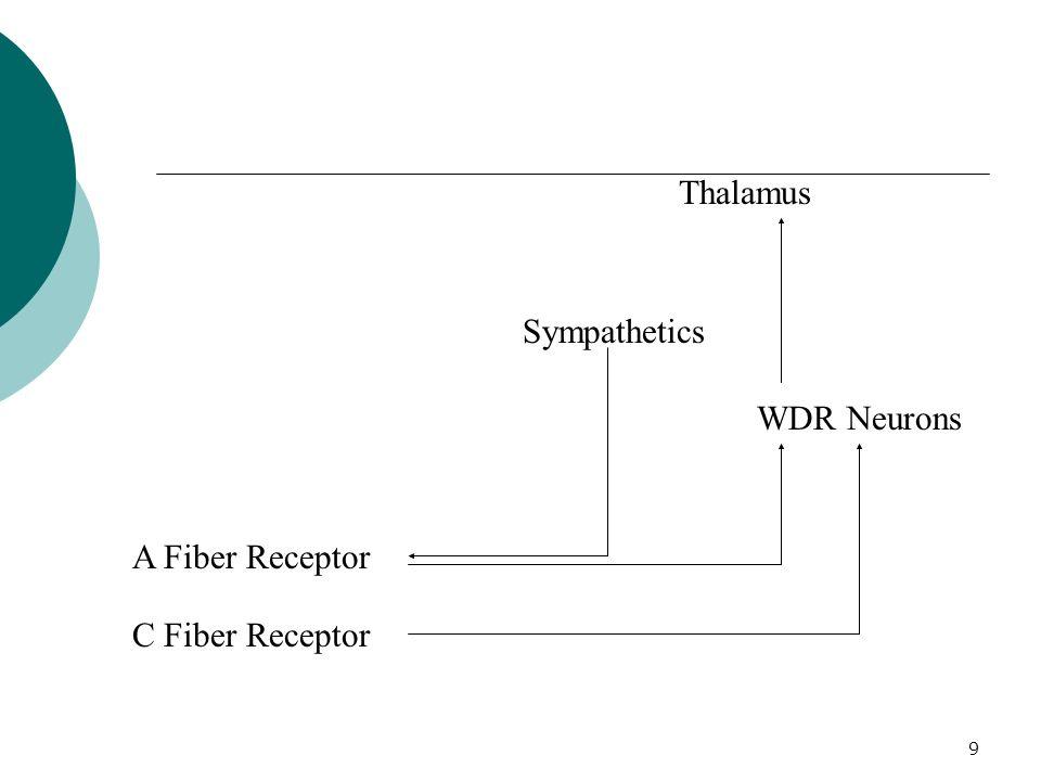 9 Thalamus WDR Neurons Sympathetics A Fiber Receptor C Fiber Receptor