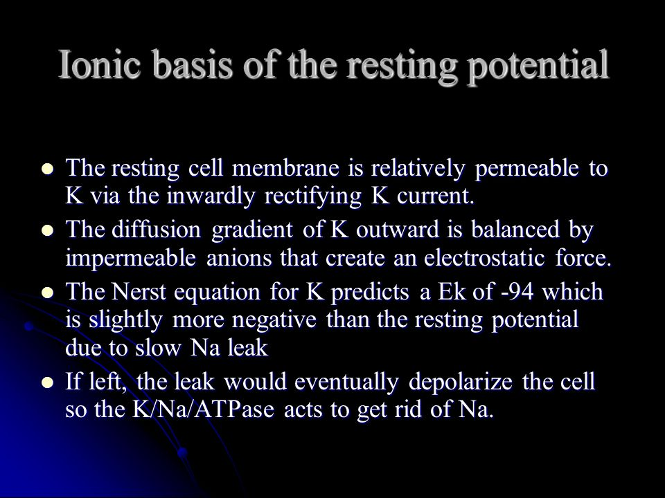 Ionic basis of the resting potential The resting cell membrane is relatively permeable to K via the inwardly rectifying K current. The resting cell me
