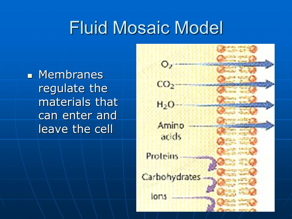 6 Fluid Mosaic Model Membranes regulate the materials that can enter and leave the cell Membranes regulate the materials that can enter and leave the