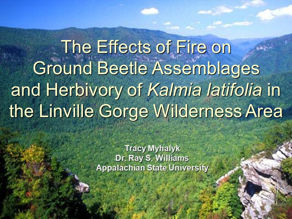 The Effects of Fire on Ground Beetle Assemblages and Herbivory of Kalmia latifolia in the Linville Gorge Wilderness Area Tracy Myhalyk Dr.