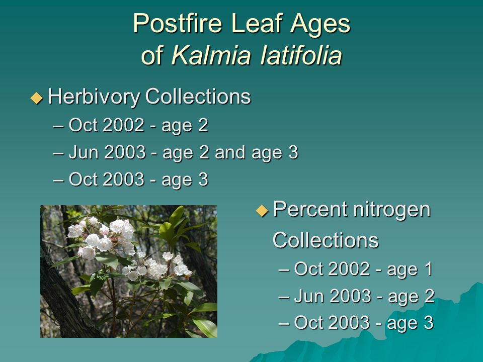 Postfire Leaf Ages of Kalmia latifolia Herbivory Collections Herbivory Collections –Oct 2002 - age 2 –Jun 2003 - age 2 and age 3 –Oct 2003 - age 3 Percent nitrogen Percent nitrogen Collections Collections –Oct 2002 - age 1 –Jun 2003 - age 2 –Oct 2003 - age 3
