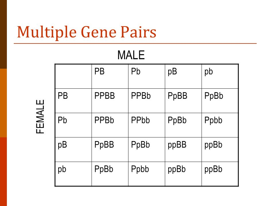 Multiple Gene Pairs PBPbpBpb PBPPBBPPBbPpBBPpBb PbPPBbPPbbPpBbPpbb pBPpBBPpBbppBBppBb pbPpBbPpbbppBb MALE FEMALE