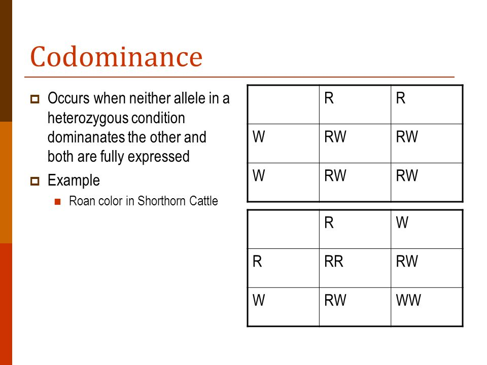 Codominance Occurs when neither allele in a heterozygous condition dominanates the other and both are fully expressed Example Roan color in Shorthorn