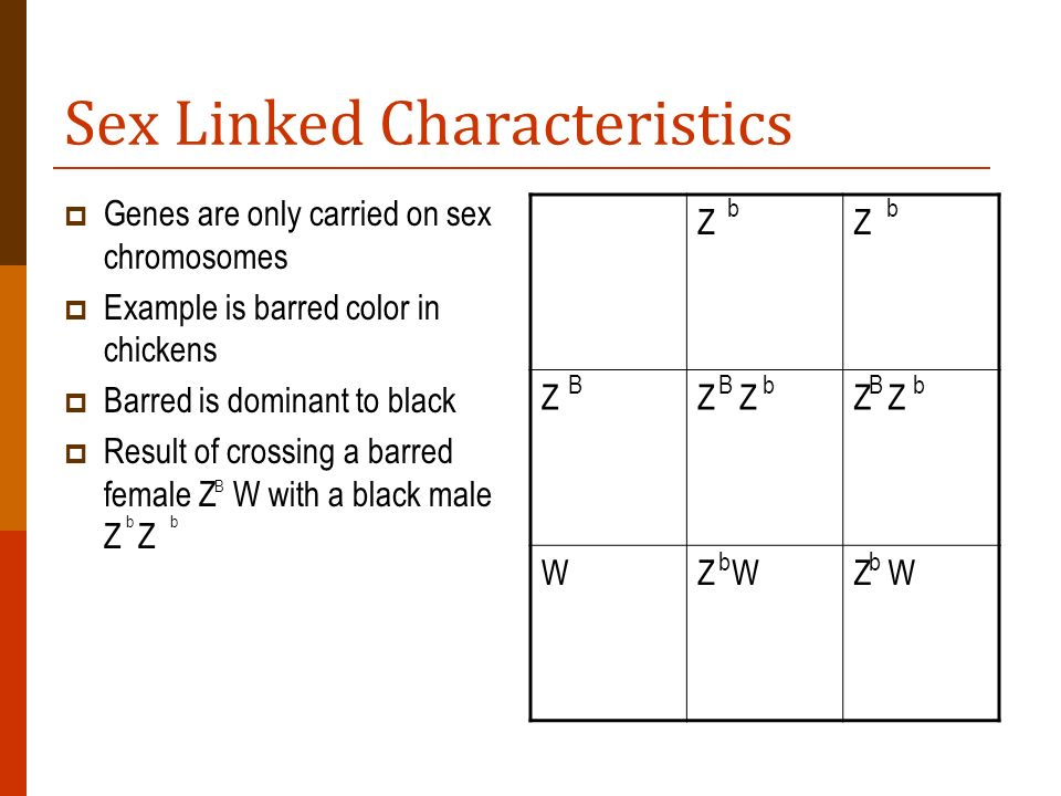 Sex Linked Characteristics Genes are only carried on sex chromosomes Example is barred color in chickens Barred is dominant to black Result of crossin