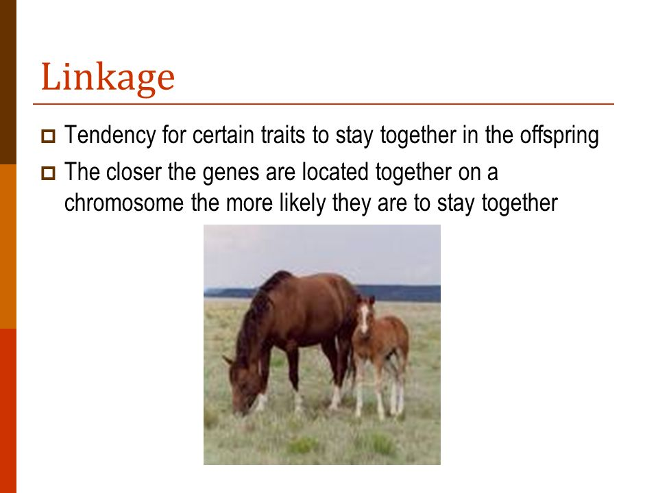 Linkage Tendency for certain traits to stay together in the offspring The closer the genes are located together on a chromosome the more likely they a