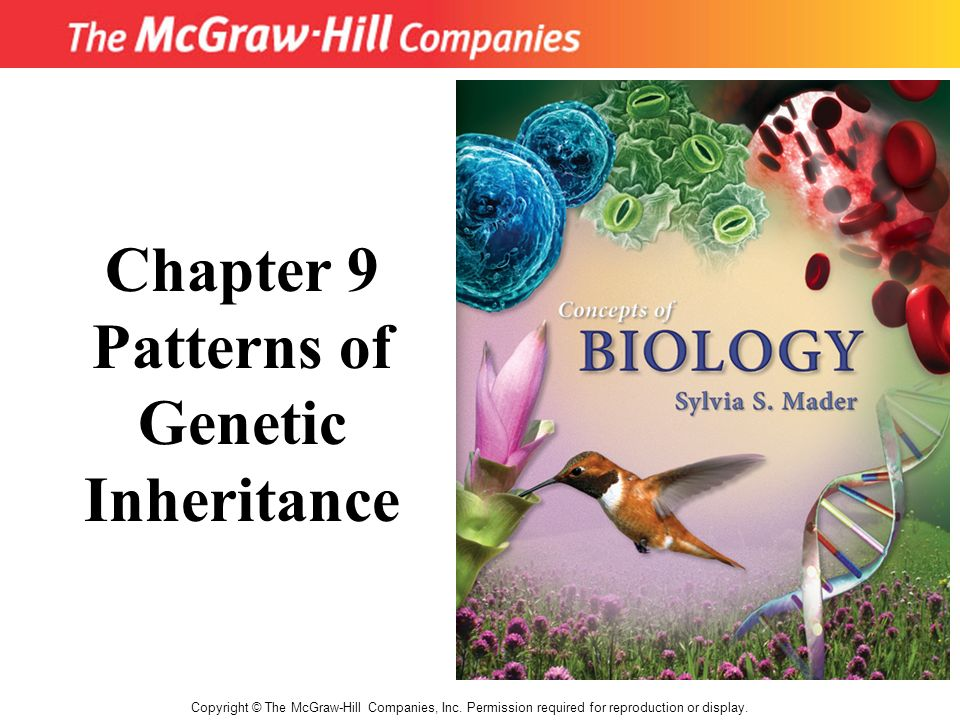Copyright © The McGraw-Hill Companies, Inc. Permission required for reproduction or display. Chapter 9 Patterns of Genetic Inheritance
