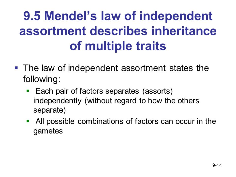 9.5 Mendels law of independent assortment describes inheritance of multiple traits The law of independent assortment states the following: Each pair o