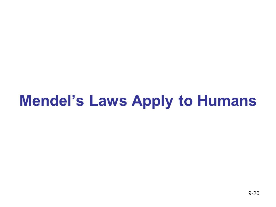 Mendels Laws Apply to Humans 9-20