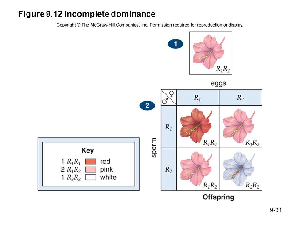 Figure 9.12 Incomplete dominance 9-31