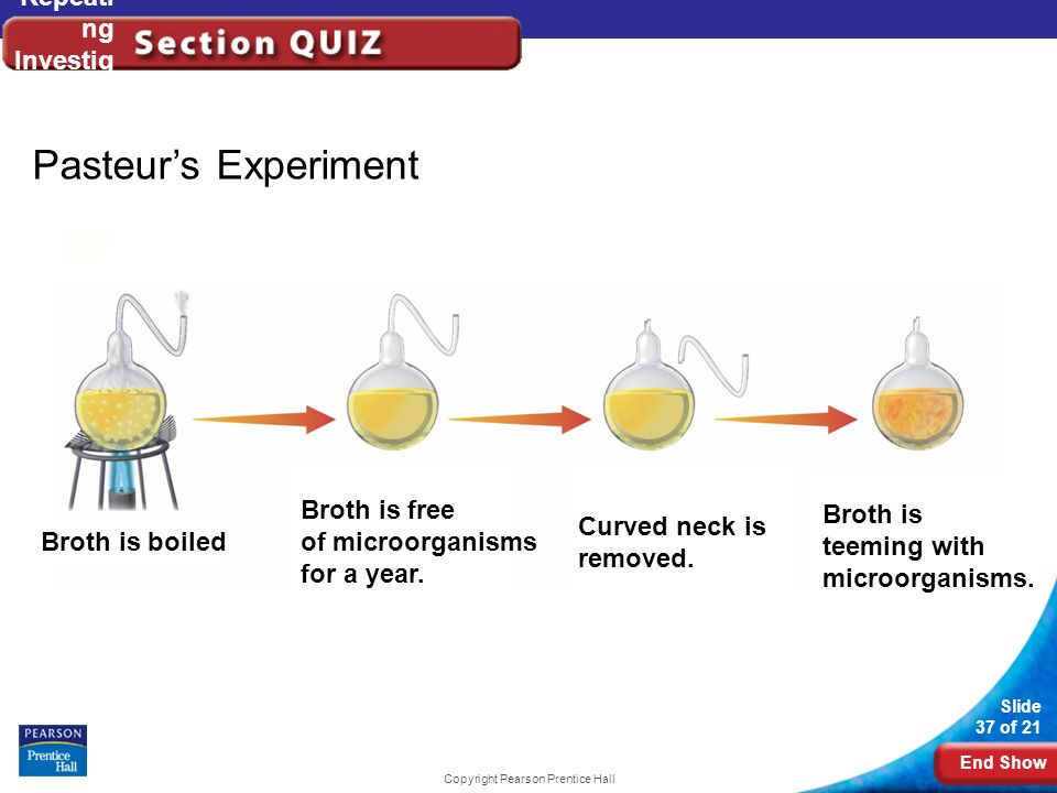 End Show Slide 37 of 21 Copyright Pearson Prentice Hall Repeati ng Investig ations Pasteurs Experiment Broth is boiled Broth is free of microorganisms