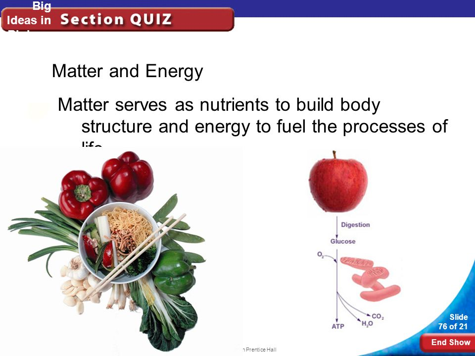 End Show Slide 76 of 21 Copyright Pearson Prentice Hall Big Ideas in Biology Matter and Energy Matter serves as nutrients to build body structure and