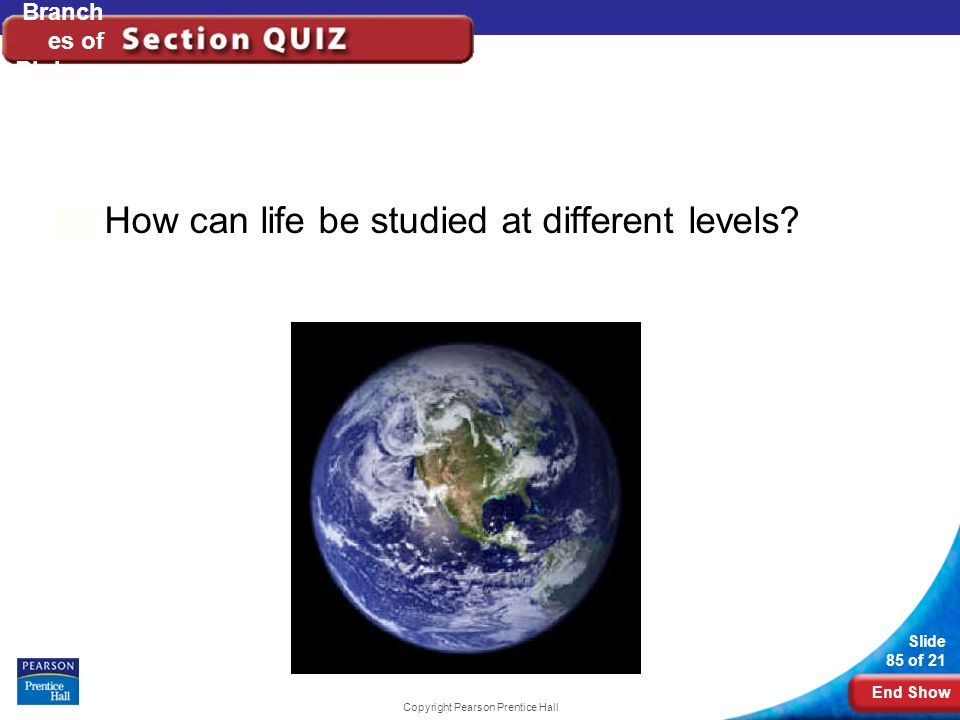 End Show Slide 85 of 21 Copyright Pearson Prentice Hall Branch es of Biology How can life be studied at different levels?