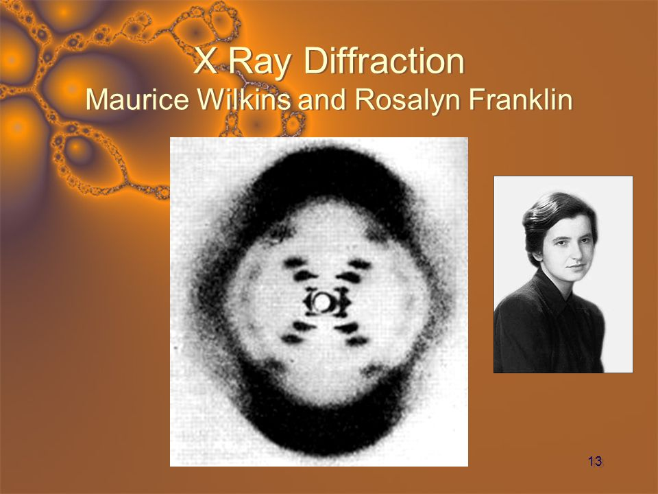 13 X Ray Diffraction Maurice Wilkins and Rosalyn Franklin