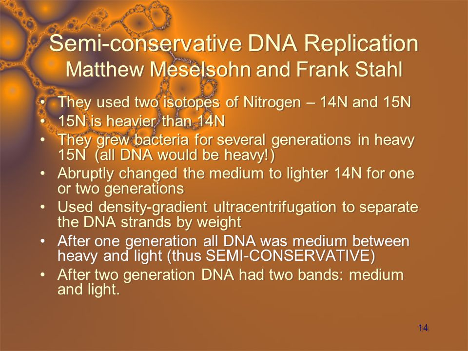 14 Semi-conservative DNA Replication Matthew Meselsohn and Frank Stahl They used two isotopes of Nitrogen – 14N and 15N 15N is heavier than 14N They g