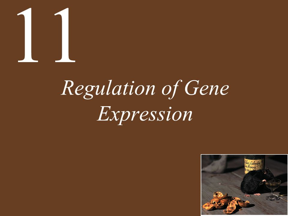 Chapter 11 Regulation of Gene Expression Key Concepts 11.1 Several Strategies Are Used to Regulate Gene Expression 11.2 Many Prokaryotic Genes Are Regulated in Operons 11.3 Eukaryotic Genes Are Regulated by Transcription Factors and DNA Changes 11.4 Eukaryotic Gene Expression Can Be Regulated after Transcription