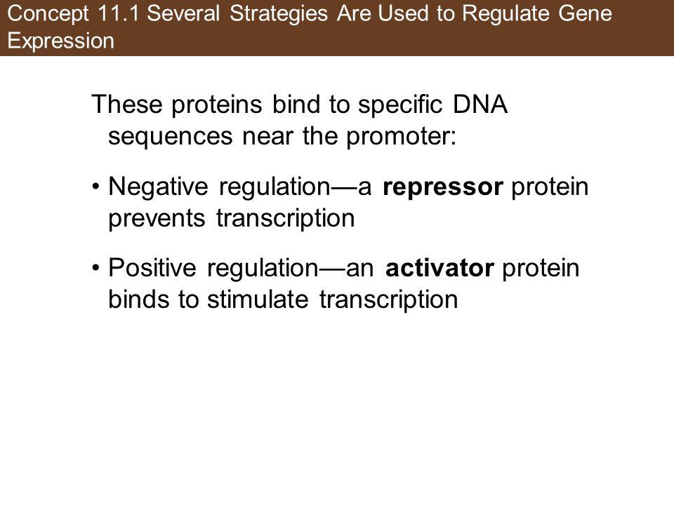 Figure 11.2 Positive and Negative Regulation (Part 1)