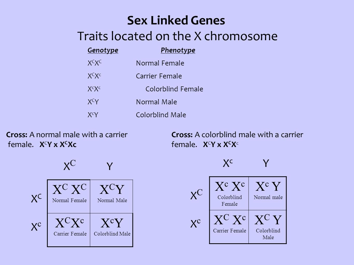 Sex Linked Genes Traits located on the X chromosome Genotype Phenotype X C X C Normal Female X C X c Carrier Female X c X c Colorblind Female X C YNor