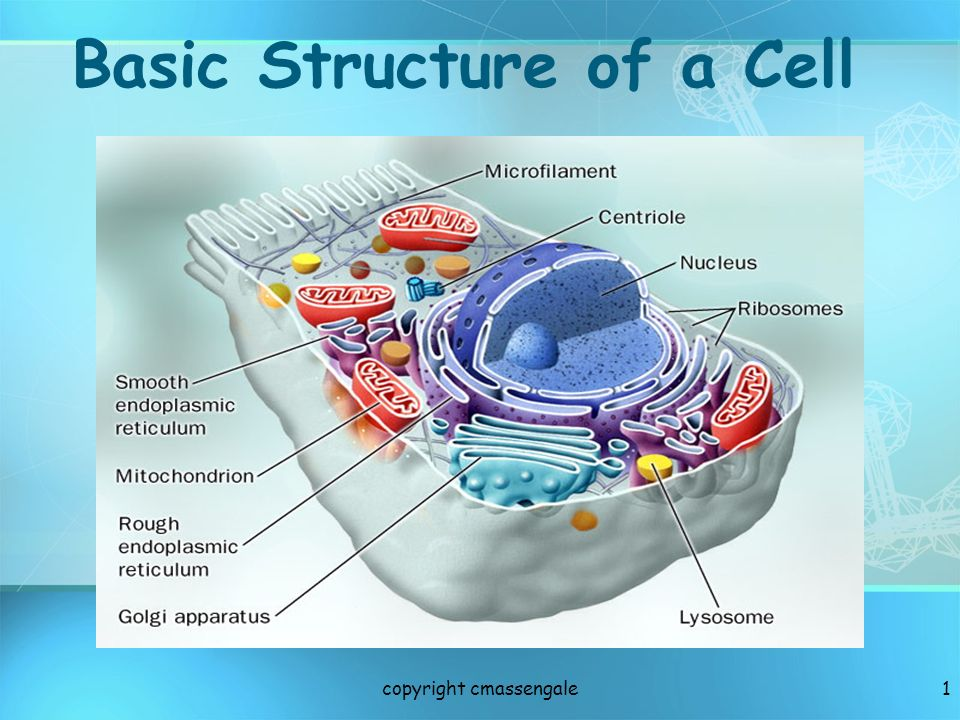 62 Golgi Animation Materials are transported from Rough ER to Golgi to the cell membrane by VESICLES copyright cmassengale