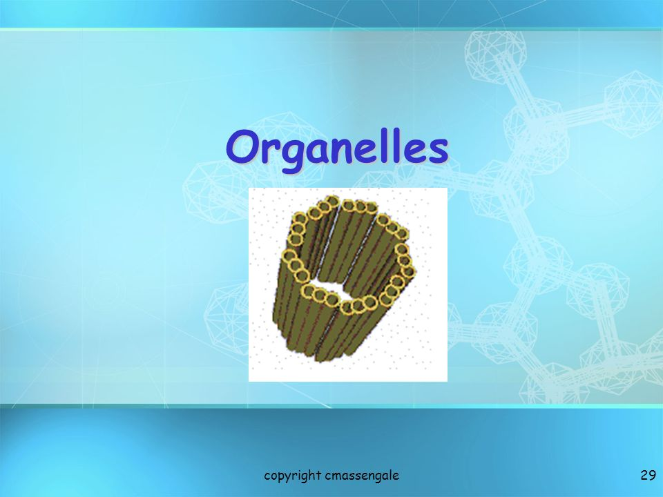29 Organelles copyright cmassengale