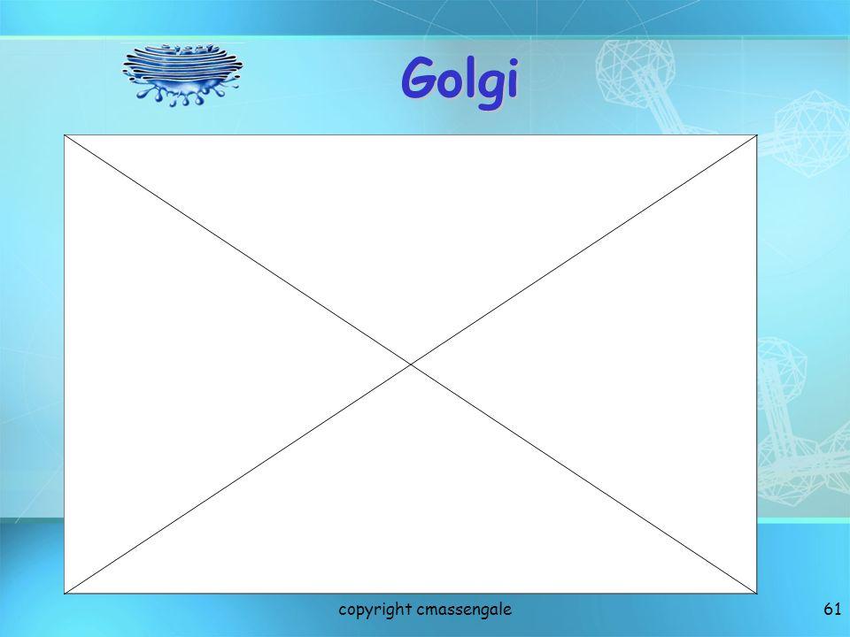 61 Golgi copyright cmassengale