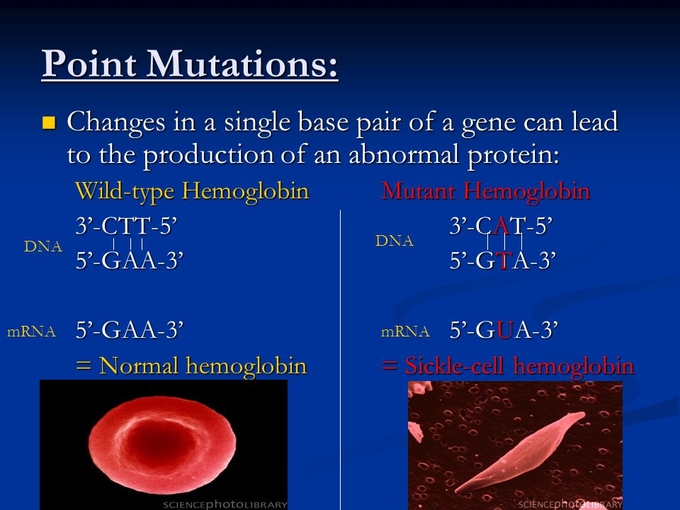 Types of Point Mutations: I.Base-pair substitutions – one base pair replaced by another pair 1.