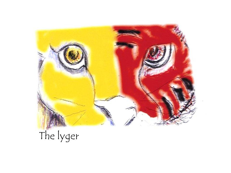 The lyger