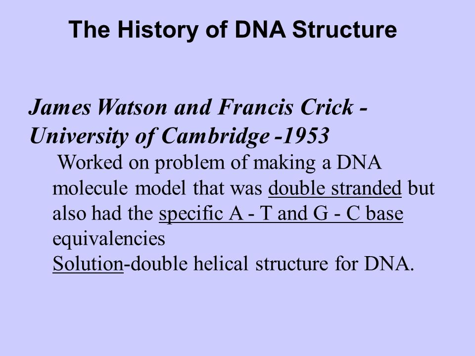The History of DNA Structure Erwin Chargaff- 1940 - Chargaffs rule – four bases may occur in varying proportions in DNA of different organisms –# of A
