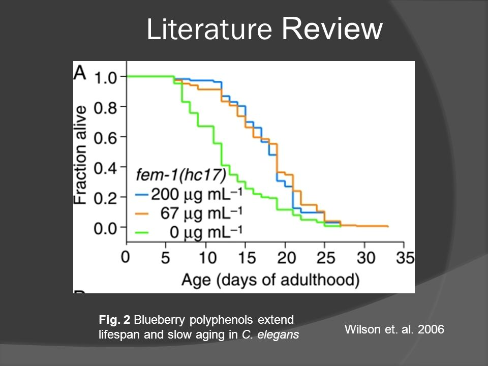 Literature Review Figure 3: Blueberry polyphenols extend lifespan and slow aging in C. elegans