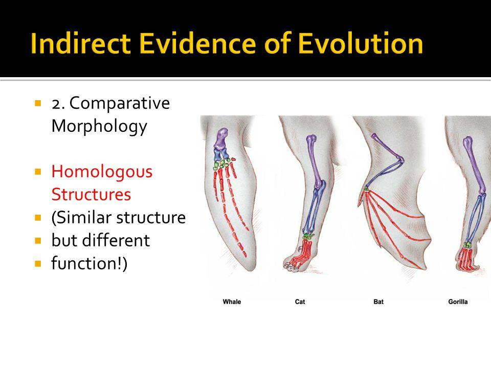 2. Comparative Morphology Homologous Structures (Similar structure but different function!)