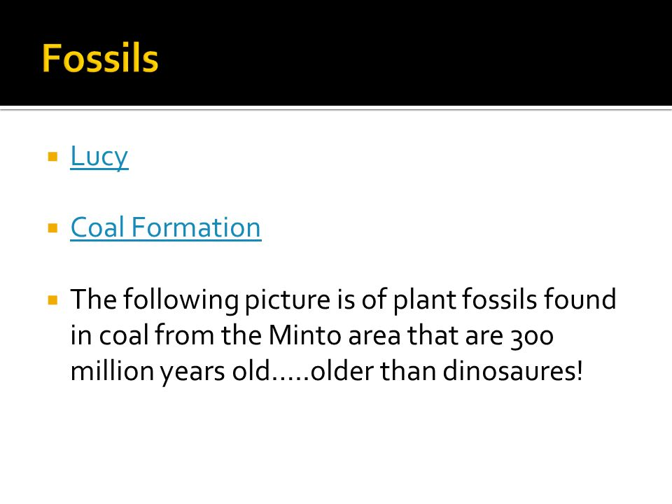 Lucy Coal Formation The following picture is of plant fossils found in coal from the Minto area that are 300 million years old…..older than dinosaures!
