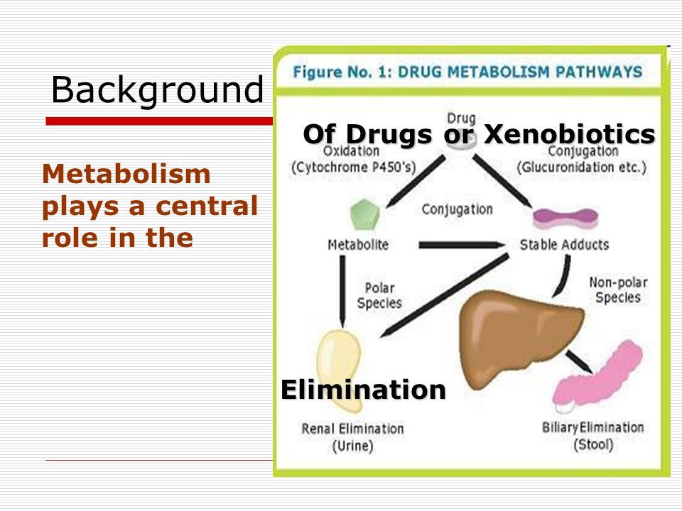 Background Metabolism plays a central role in the Elimination Of Drugs or Xenobiotics