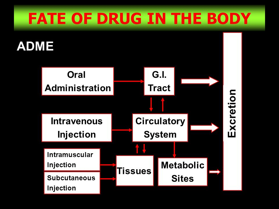 4 FATE OF DRUG IN THE BODY ADME Oral Administration G.I. Tract Circulatory System Intravenous Injection Tissues Metabolic Sites Intramuscular Injectio