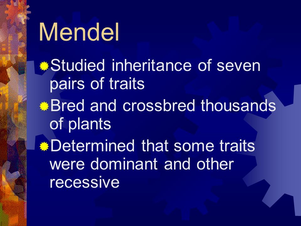 Mendel Studied inheritance of seven pairs of traits Bred and crossbred thousands of plants Determined that some traits were dominant and other recessi