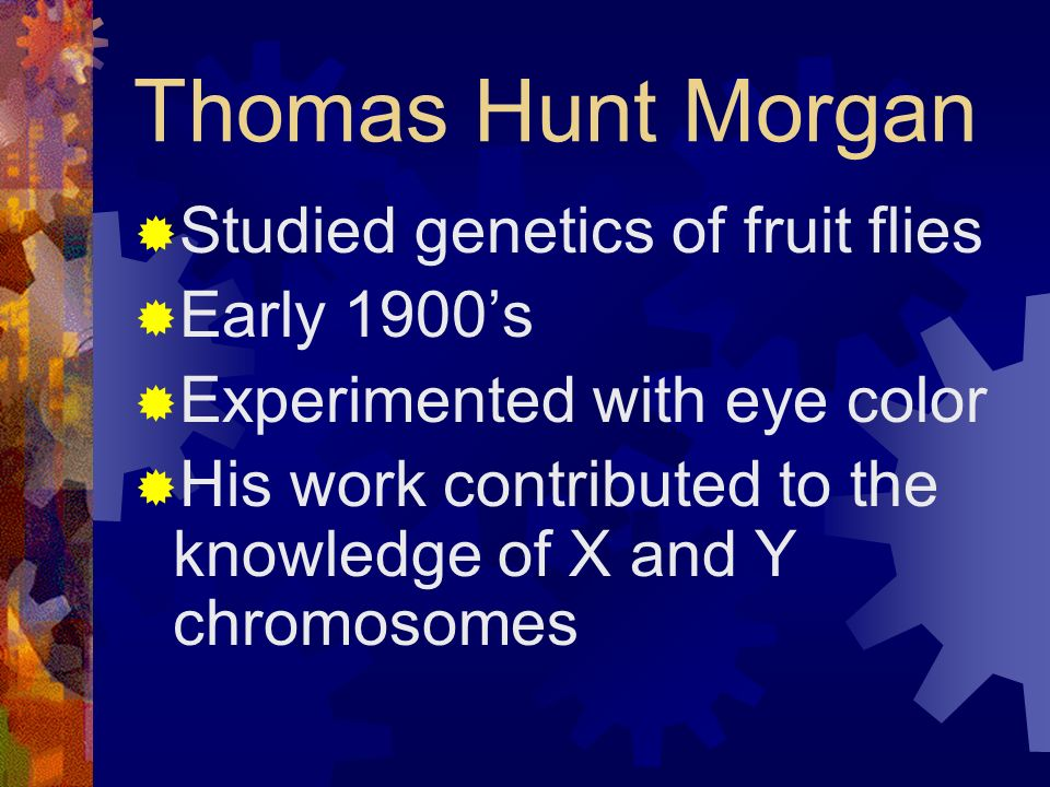 Thomas Hunt Morgan Studied genetics of fruit flies Early 1900s Experimented with eye color His work contributed to the knowledge of X and Y chromosome
