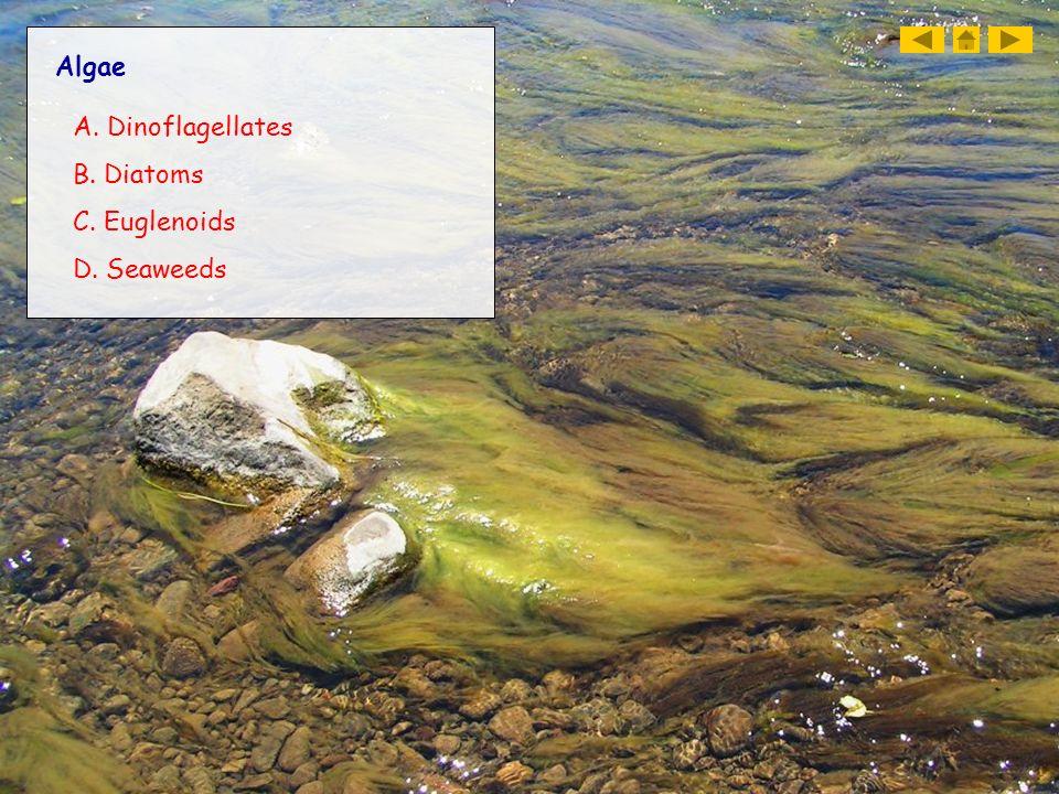 Algae A. Dinoflagellates B. Diatoms C. Euglenoids D. Seaweeds