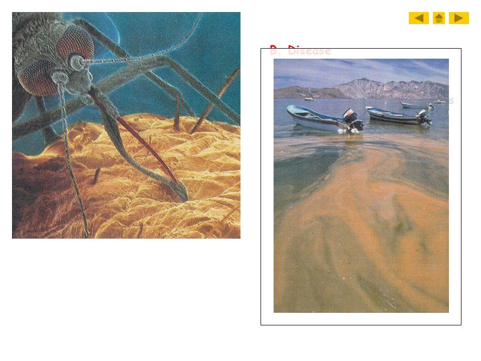 B. Disease 1. Giardia- diarrhea 2. Trypanosoma- blood diseases 3. Dinoflagellates- red tide
