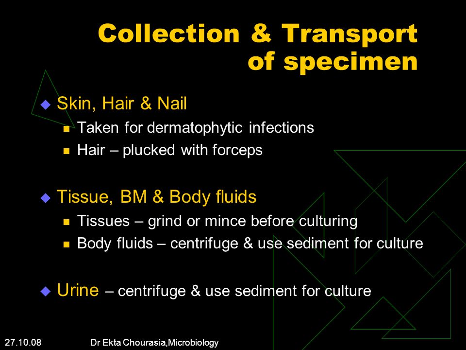 27.10.08 Dr Ekta Chourasia,Microbiology Collection & Transport of specimen Skin, Hair & Nail Taken for dermatophytic infections Hair – plucked with fo