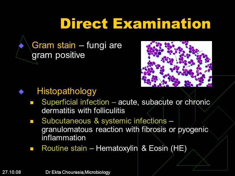 27.10.08 Dr Ekta Chourasia,Microbiology Direct Examination Gram stain – fungi are gram positive Histopathology Superficial infection – acute, subacute