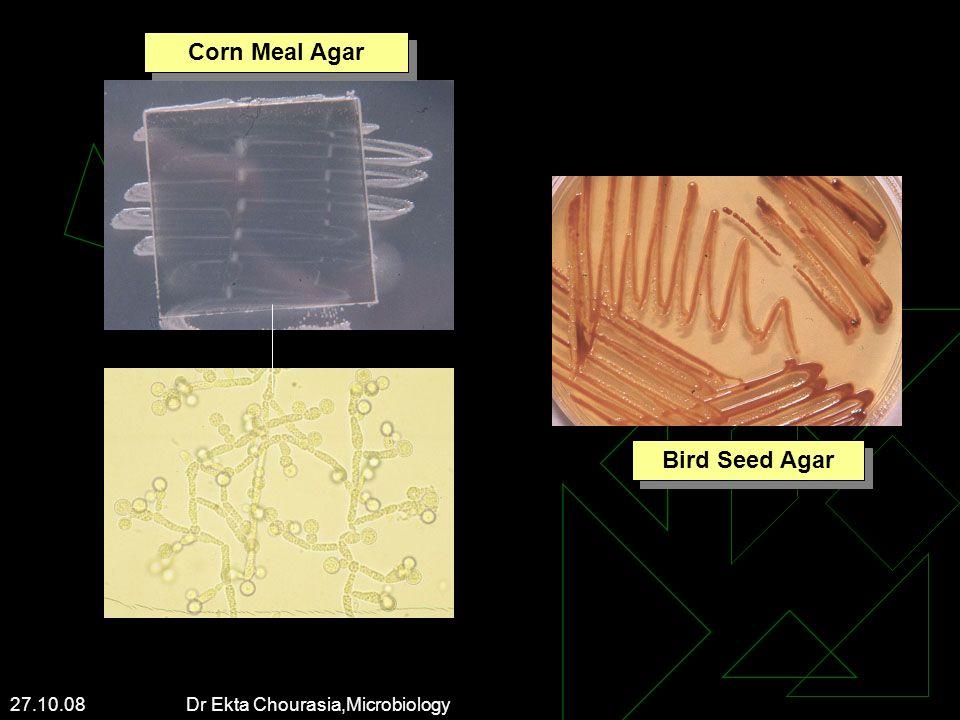 27.10.08 Dr Ekta Chourasia,Microbiology Corn Meal Agar Bird Seed Agar