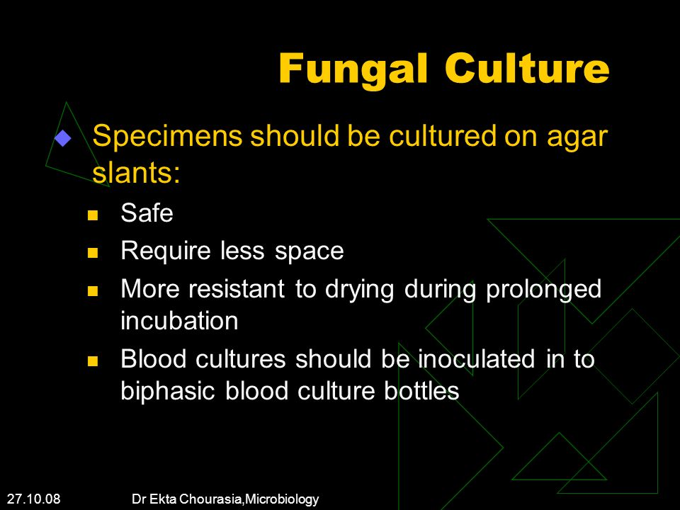 27.10.08 Dr Ekta Chourasia,Microbiology Fungal Culture Specimens should be cultured on agar slants: Safe Require less space More resistant to drying d