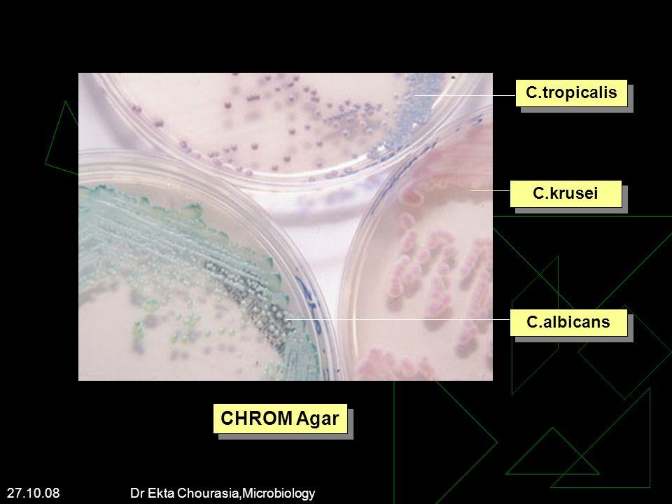 27.10.08 Dr Ekta Chourasia,Microbiology C.tropicalis C.krusei C.albicans CHROM Agar