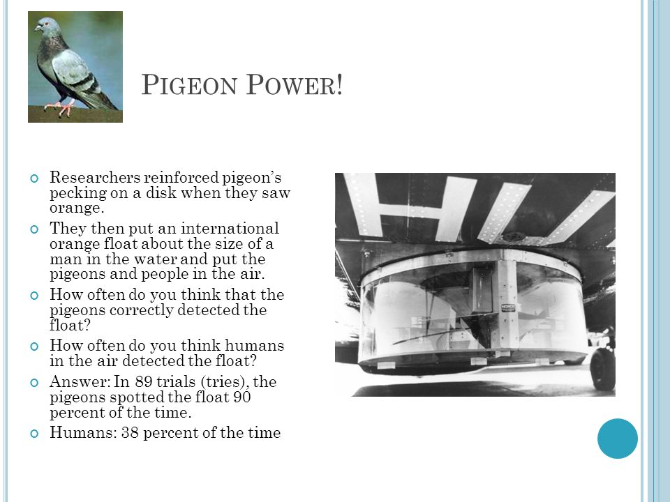 P IGEON P OWER . Researchers reinforced pigeons pecking on a disk when they saw orange.