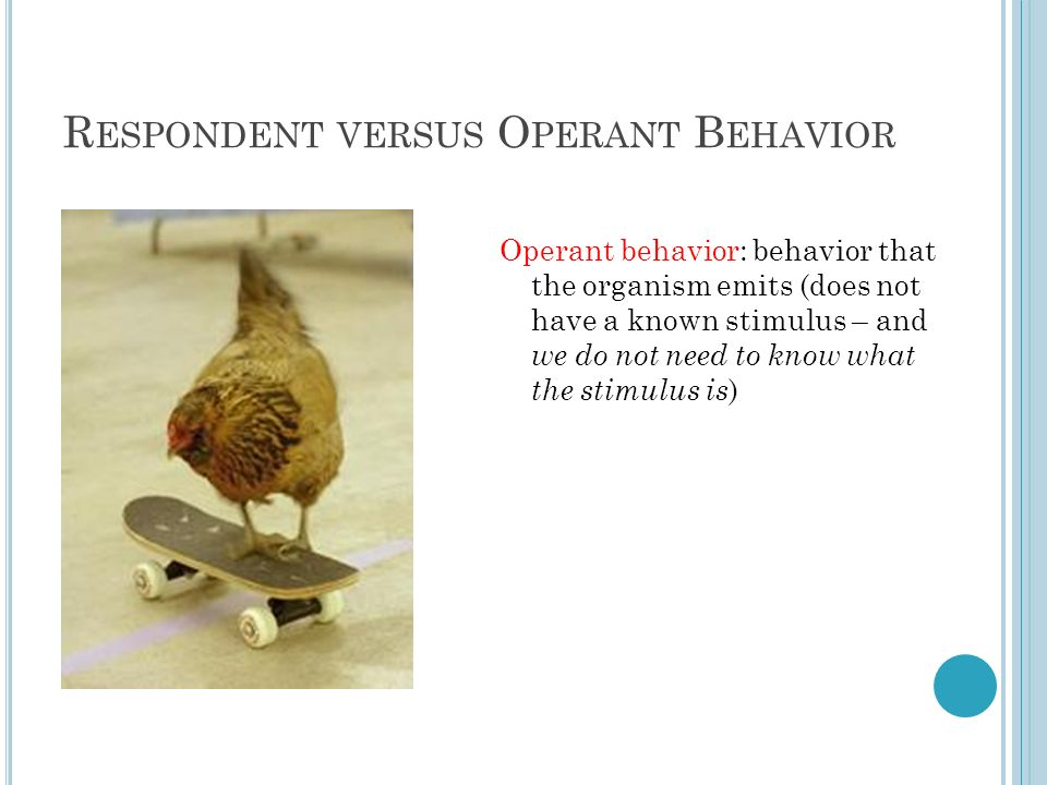 R ESPONDENT VERSUS O PERANT B EHAVIOR Operant behavior: behavior that the organism emits (does not have a known stimulus – and we do not need to know what the stimulus is )
