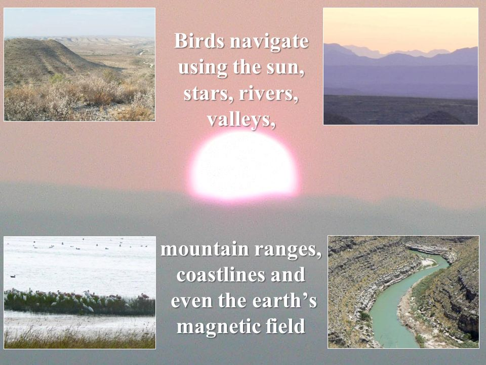 Birds navigate using the sun, stars, rivers, valleys, mountain ranges, coastlines and even the earths magnetic field