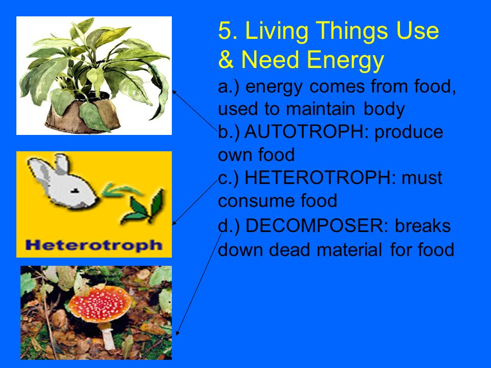 5. Living Things Use & Need Energy a.) energy comes from food, used to maintain body b.) AUTOTROPH: produce own food c.) HETEROTROPH: must consume foo