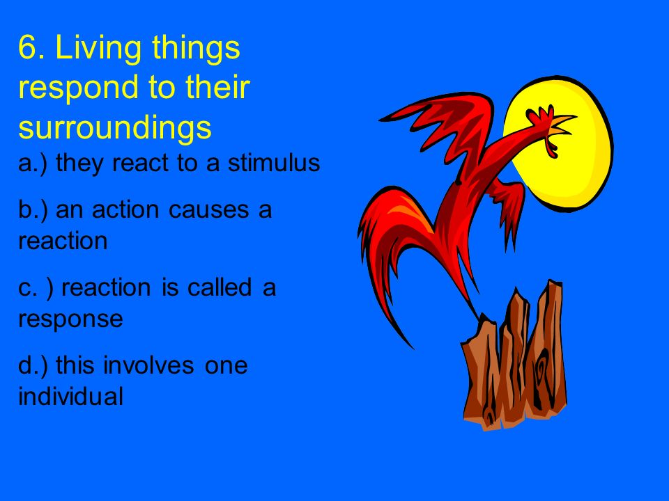 6. Living things respond to their surroundings a.) they react to a stimulus b.) an action causes a reaction c. ) reaction is called a response d.) thi