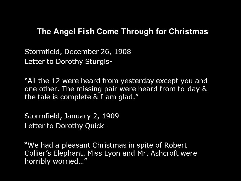 The Angel Fish Come Through for Christmas Stormfield, December 26, 1908 Letter to Dorothy Sturgis- All the 12 were heard from yesterday except you and