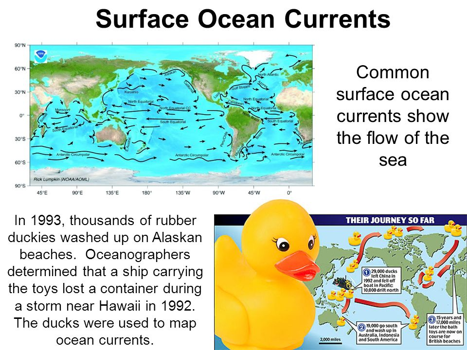 Surface Ocean Currents Common surface ocean currents show the flow of the sea In 1993, thousands of rubber duckies washed up on Alaskan beaches. Ocean